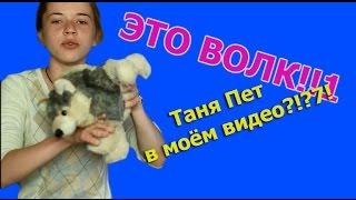 Злой кинолог: ЭТО ВОЛК! Таня Пет в моём видео?!1?7