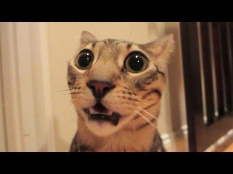 STINKY CAT FART