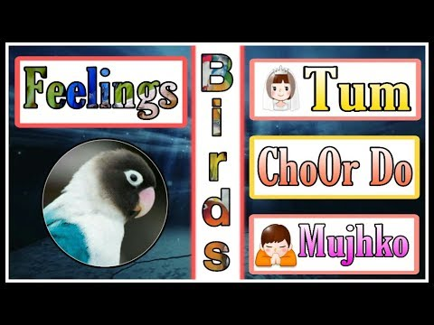 chalo-tum-chor-do-mujh-ko-emotional-quotes-2-line-sad-status-whatsapp-video-by-zumar-creation