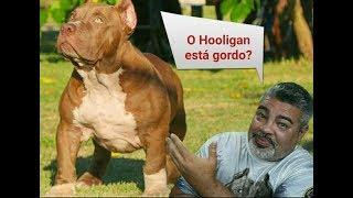 O Hooligan está gordo??????