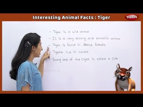 Interesting Animal Facts : Tiger | Tiger Essay in English