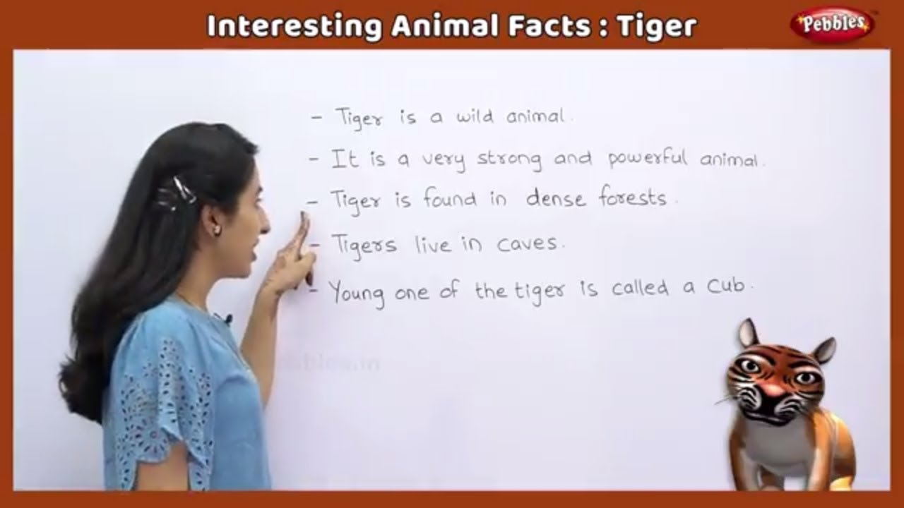 Interesting Animal Facts  Tiger  Tiger Essay In English  Tiger  Interesting Animal Facts  Tiger  Tiger Essay In English  Tiger Song   Tiger Story  Learn Animals