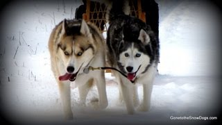 Shiloh and Shelby on BAD DOG on Animal Planet