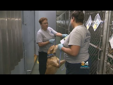 Miami-Dade Animal Services Moving To Brand New Adoption & Protection Center