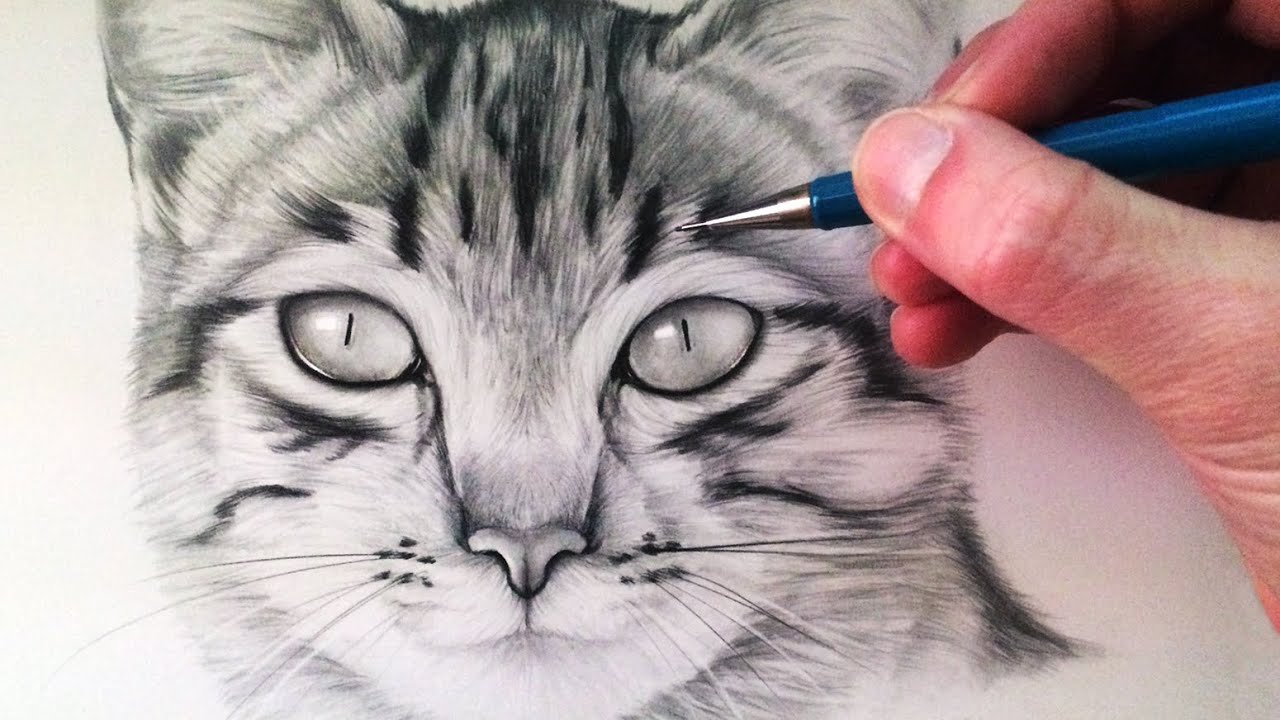 how to draw a cat youtube