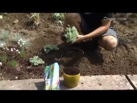 Bricoman a jardiner a plantaci n de follajes plateados - Bricomania jardineria ...