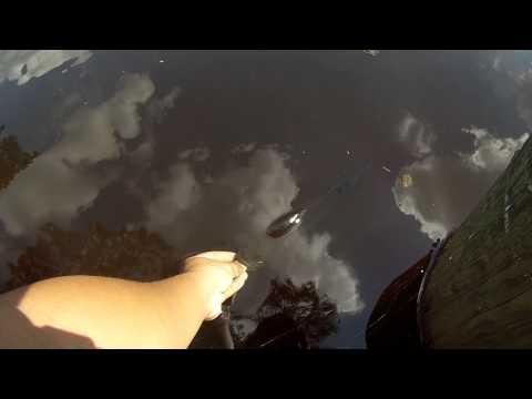 Fishing For Largemouth Bass Using Wacky Rigged Senkos (Hammonton, NJ)