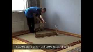 Teaching the obedience movement jumping over a hurdle to a dog (shi...