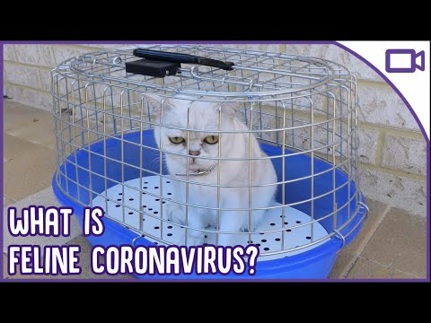 FELINE CORONAVIRUS - All You Need To Know