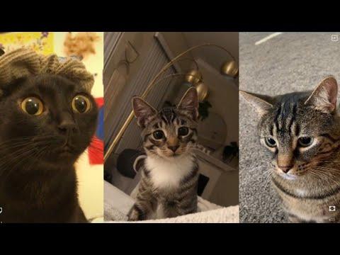 Cats of Tiktok