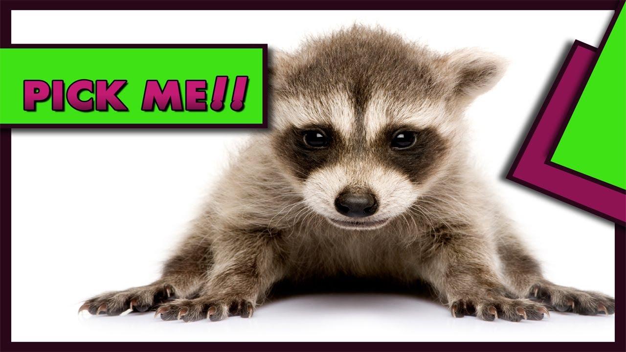 BEDTIME STORIES PRESENTSBaby Animals The Cutest Of Cute 1 Bestselling Book KIDS LOVE IT D