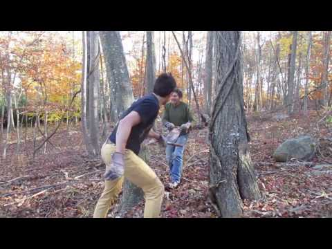 Felling a tree with a two-man hand saw