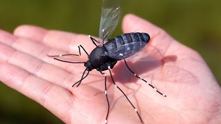 ENORMOUS MOSQUITO!