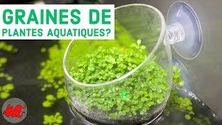 Graines de plantes aquatiques ?