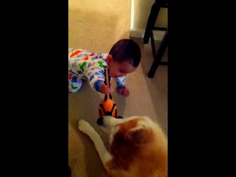 Japanese Akita and baby playing