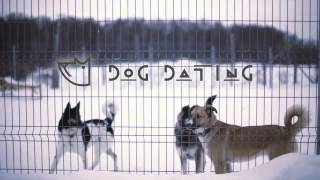 Dog Dating Date to save dogs Grape , РОССИЯ