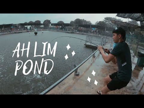 FISHING For Food Before LOCKDOWN At Ah Lim's Saltwater Pond SINGAPORE