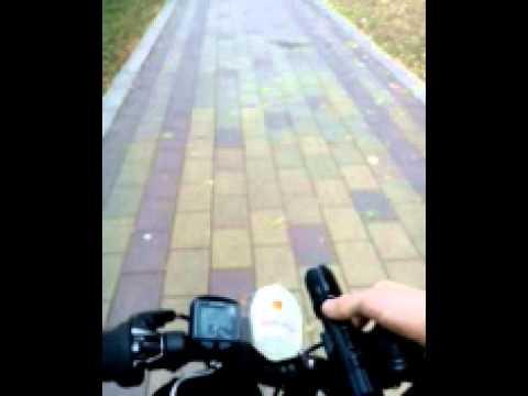 видео: Электрошокер и собаки