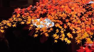 京都・嵯峨野の紅葉シリーズの完結編は、宝筐院(ほうきょういん)と大...