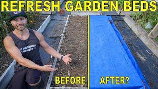 REFRESH GARDEN BEDS In Just 6 WEEKS With This Simple Garden Tip