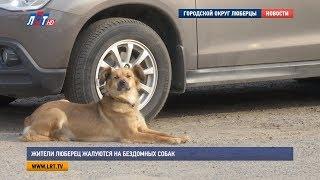 Жители Люберец жалуются на бездомных собак