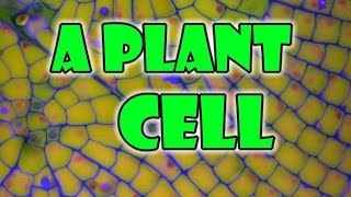 Plant Cell - Parts of a Plant Cells Model