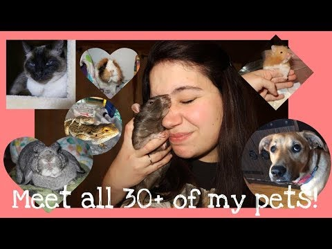 Meet All My Pets!! || & YES I Have Over 30 Of Them!
