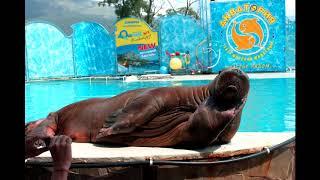Ялта Крым - театр морских животных Акватория. Песни, упражнения и трюки.