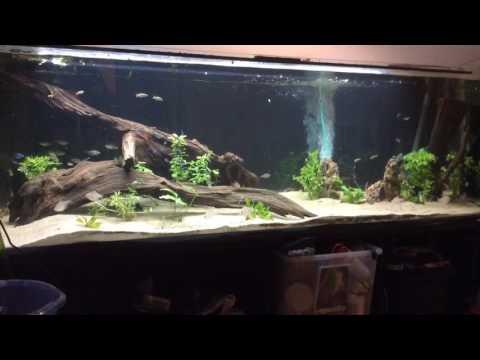 720 liter freshwater aquarium