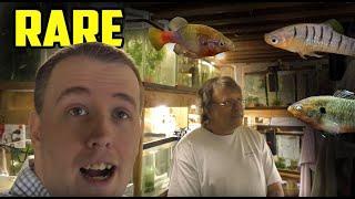 Rarest Livebearer Fish Room Tour! Green Dragon Plecos. SelectAquatics.com thumbnail
