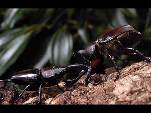 昆虫たちの不思議な生態を活写!映画『アリのままでいたい』予告編