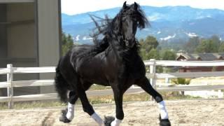 самые красивые фото лошадей(на мой счёт)