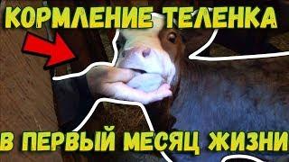 👉Кормление теленка в первый месяц жизни // Чем и сколько? // Жизнь в деревне