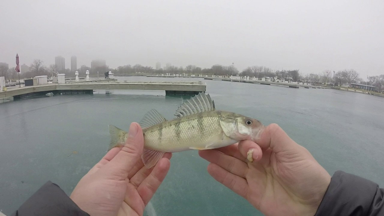 Ice fishing for jumbo perch in chicago montrose harbor for Fishing in chicago