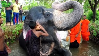 Monks And Huge Elephant Having Nice Time Bathing  In A River