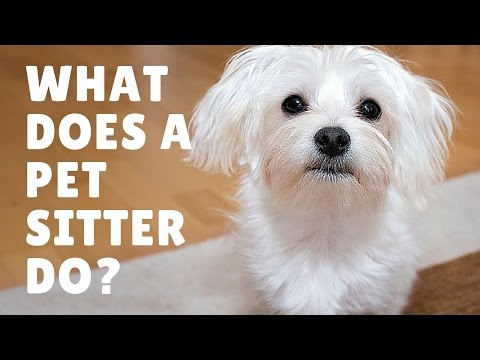 What Does A Pet Sitter Do?