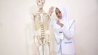The function part of human body | Febriani Fitria