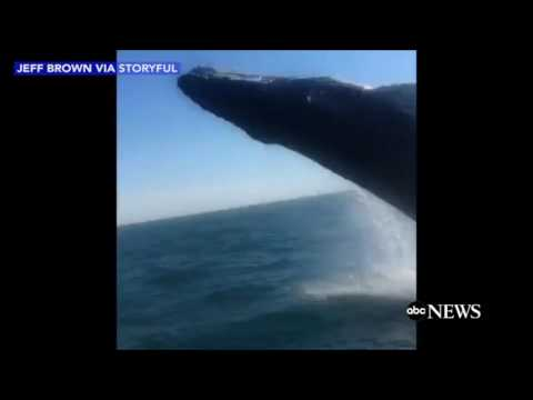 Watch Humpback Whale Soak Whale Watchers in Virginia!