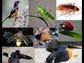 Akibat jika burung murai makan serangga kecoa android