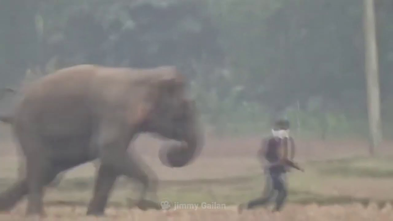 Angry Animals That Took Revenge On Humans