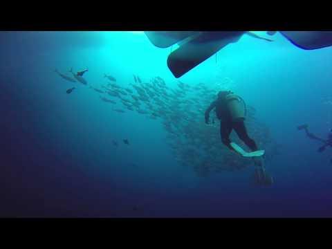Jack fish storm in Balicasag island,Philippines,Jack fish風暴..25m deep.