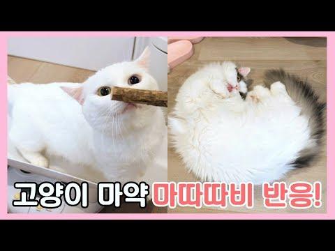 고양이 마약 마따따비 첫 반응!