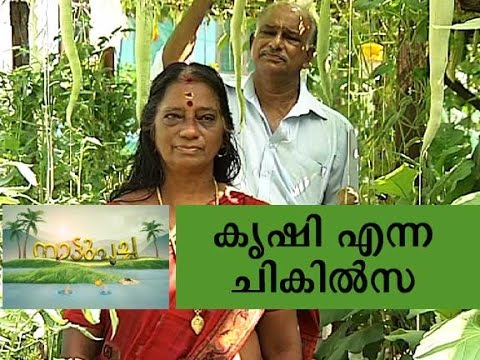 Terrace farming - Manorama News Nattupacha