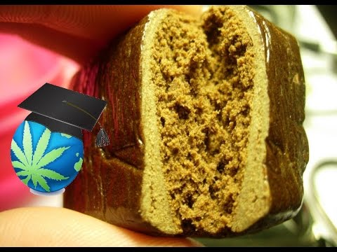 What is Hash? Hashish Basics Guide