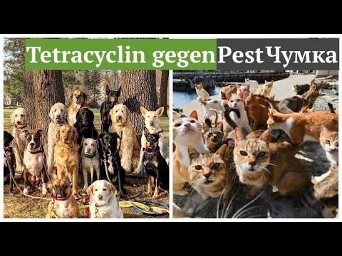ЛЕЧЕНИЕ ЧУМКИ И ЭНТЕРИТА У СОБАК , КОШЕК И ДРУГИХ ЖИВОТНЫХ #чумка  #pest_dog_cat #oldenburgru#237