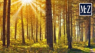Gimp Tutorial - Raggi di sole 2 - Rays of sunshine