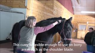 an overview of the grooming technique and a guide of how to groom a horse