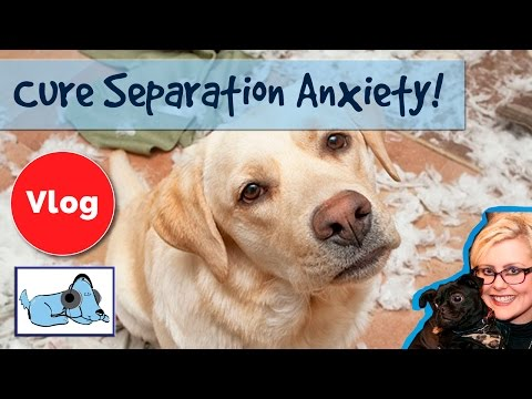 How to Cure Separation Anxiety in Dogs! Stop Your Dog From Barking When You Leave!