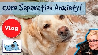 Repeat youtube video How to Cure Separation Anxiety in Dogs! Stop Your Dog From Barking When You Leave!