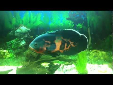 Fish Tank With Eheim 2213 Oscar